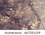 Dandelion With Water Drops. A...