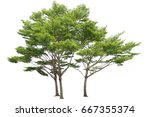 Three Trees Isolated On White...