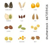 different seeds isolated on... | Shutterstock .eps vector #667355416
