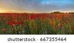 Red Poppies Among Cornflowers...