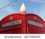 Seagull Phone Booth