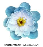 Peony Flower Turquoise On A...