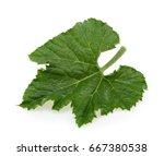 Pumpkin Leaf Isolated On White