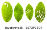 leaves are eaten by insects on... | Shutterstock . vector #667393804