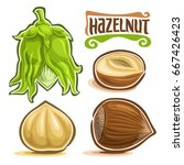 vector set of hazelnut nuts ... | Shutterstock .eps vector #667426423