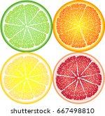 orange  lemon  lime and... | Shutterstock . vector #667498810