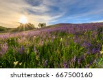 sunset on a hill covered with... | Shutterstock . vector #667500160