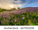 sunset on a hill covered with... | Shutterstock . vector #667501030