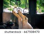 swine slaughterhouse uses hot... | Shutterstock . vector #667508470