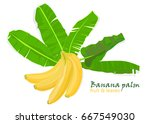 branch tropical palm banana... | Shutterstock .eps vector #667549030