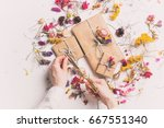 female hands cutting bow on...   Shutterstock . vector #667551340