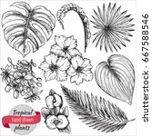 vector collection of hand drawn ... | Shutterstock .eps vector #667588546
