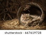 portrait of fluffy tabby in an... | Shutterstock . vector #667619728