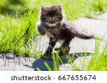 Stock photo small funny kitten is walking on the road 667655674