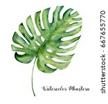 watercolor tropical leaf of... | Shutterstock . vector #667655770