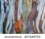 Colorful Patterns On Bark