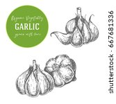 engraving garlic illustration.... | Shutterstock . vector #667681336