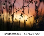 tree leaves abstract sunset... | Shutterstock . vector #667696720