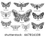 set of moths and butterflies... | Shutterstock .eps vector #667816108