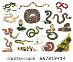 Various Snakes Poses Vector...