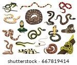 various snakes poses vector...   Shutterstock .eps vector #667819414