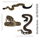 Snake Rattlesnake Set Cartoon...