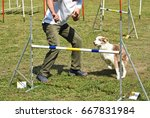 dog agility contest  | Shutterstock . vector #667831984