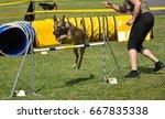 dog agility contest  | Shutterstock . vector #667835338
