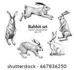 set of hand drawn rabbit...   Shutterstock .eps vector #667836250