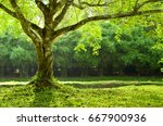 beautiful tree for  background | Shutterstock . vector #667900936