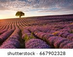 superb lavender furrows ending... | Shutterstock . vector #667902328
