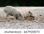 small wild boar in the forest... | Shutterstock . vector #667920073