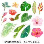 tropical floral collection of... | Shutterstock .eps vector #667931518