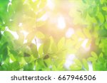 bright summer background with... | Shutterstock . vector #667946506