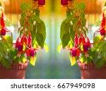 highlight shadow of beautiful...   Shutterstock . vector #667949098