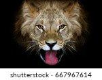Portrait Of A Lion On A Black...