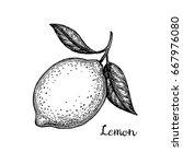 lemon. isolated on white... | Shutterstock .eps vector #667976080