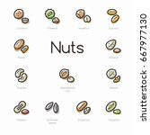 set of colorful nuts icons... | Shutterstock .eps vector #667977130