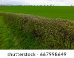 fields and clouds in the... | Shutterstock . vector #667998649