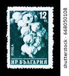 Small photo of MOSCOW, RUSSIA - JUNE 26, 2017: A stamp printed in Bulgaria shows bunch of garlic (Allium sativum), circa 1958