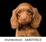 Stock photo cute dog over black 668055823