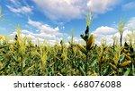 corn field with blue sky 3d... | Shutterstock . vector #668076088