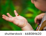 Stock photo a little boy looks at the ladybird on his hand ladybug crawling on the hand of the child 668084620