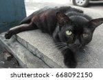 street cats | Shutterstock . vector #668092150