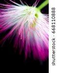 defocused purple flower on... | Shutterstock . vector #668110888
