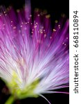 defocused blurred purple flower ... | Shutterstock . vector #668110894