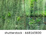 building with climber plants ... | Shutterstock . vector #668165830