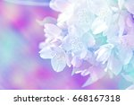 white jasmine. the branch... | Shutterstock . vector #668167318