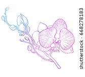 hand drawing   branch of orchid ... | Shutterstock .eps vector #668278183