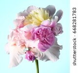 bouquet with white peonies and...   Shutterstock . vector #668281783